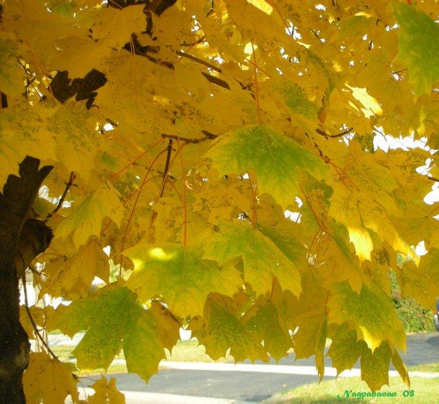 fall-08