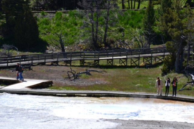 Boardwalk at the upper geyser of Mammoth Hot Spring