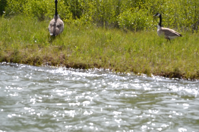 Taken while on a float in the Snake River