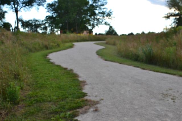 Meandering paths