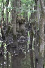 Upper swamp