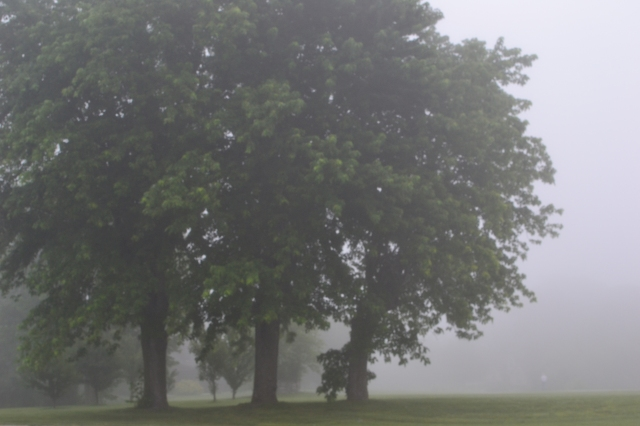 Three trees in a fog