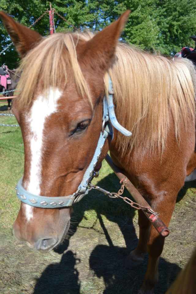 A horse at Jonamac Orchard
