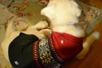 Sly sporting his Christmas fashion