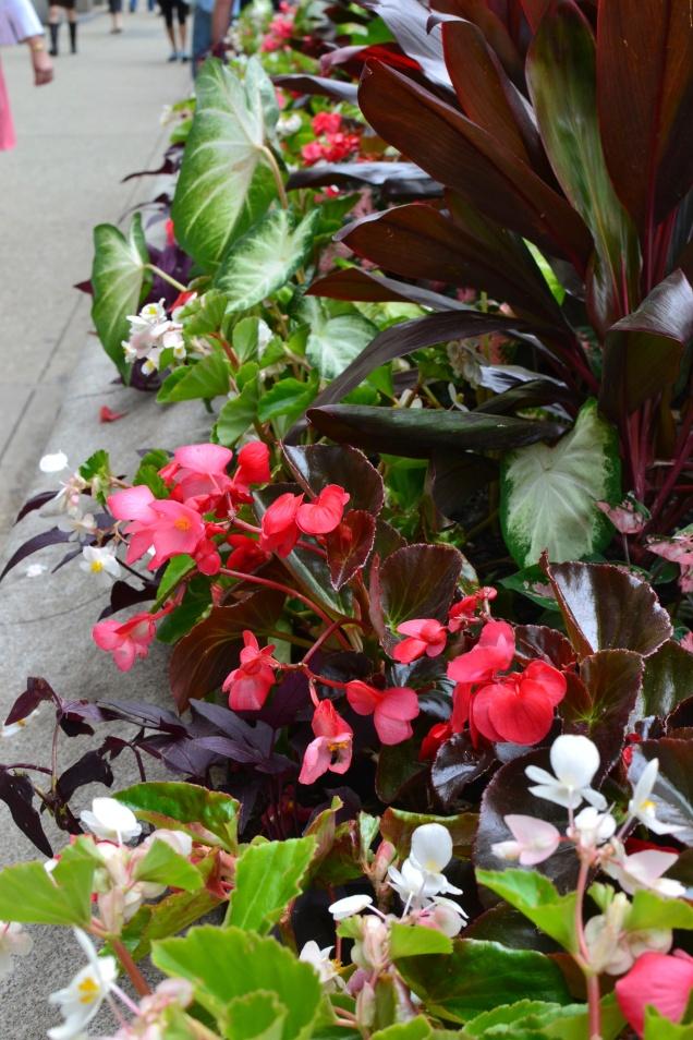Flower islands around the city