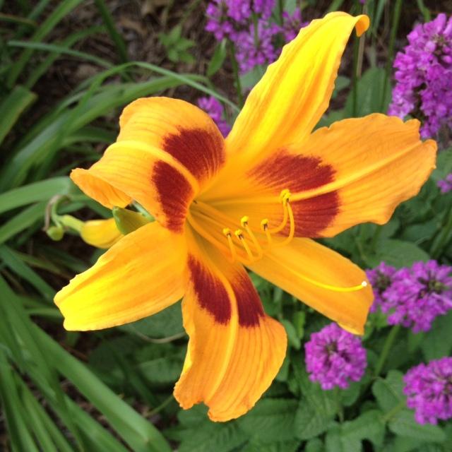 Flowers at Berwyn Train Depot garden