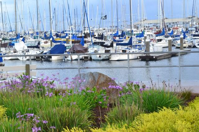 Monterey Archipelago Yacht Club